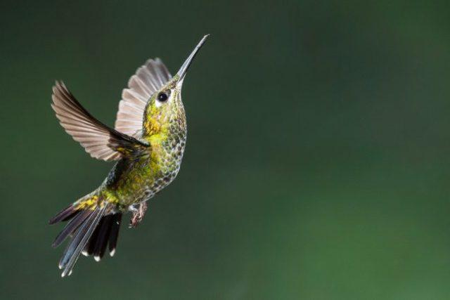 【体験談】ハチドリを日本で見た!?蛾ではなく本物だったんだって