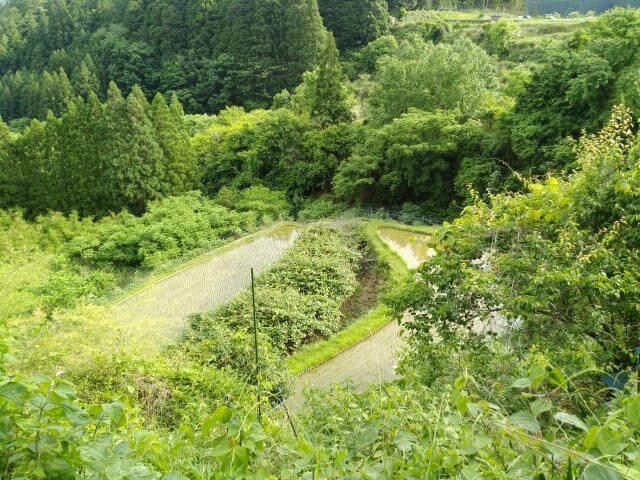 谷瀬の里 段々畑